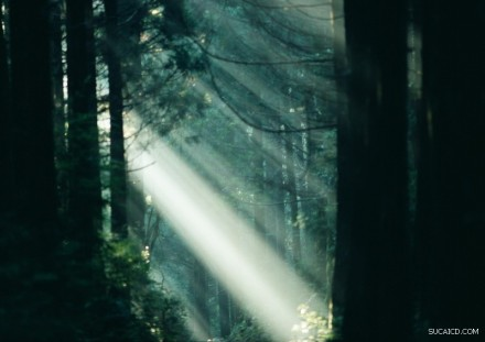 Light through the forest...